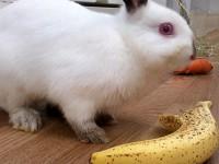 にんじんとかバナナとかかぼすとか