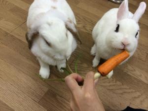 ごまごま☆ペンは食べ物ではございません!4