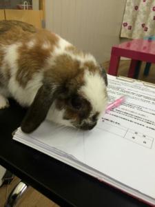 ごまごま☆ペンは食べ物ではございません!1