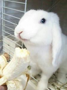 毎日バナナもそろそろ…!1