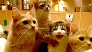 猫カフェMOCHA2