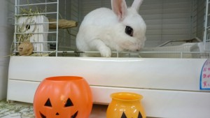 小さなかぼちゃと大きなかぼちゃ!1