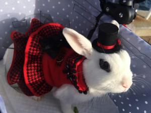 びび様、うさフェス2015で赤いドレスを身に纏う!4