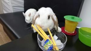 ミッシュちゃんお砂糖食べないでっ!3