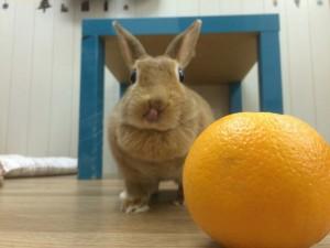 みかんとオレンジ3