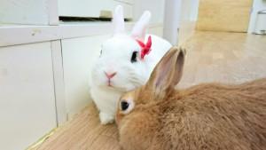 びび様のダイエットと「マツコの知らない世界」の内容変更のお知らせ!2