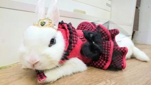 女王びび様とぬいぐるミッシュちゃん…うさぎホテルの「もふ」くん1