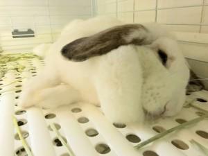 ミッシュちゃんの寝ている隙に~同伴うさぎさん「ひめくん」4