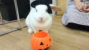 かぼちゃの顔したミッシュちゃん!1