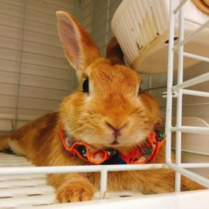 かぼちゃの顔したミッシュちゃん!4
