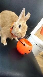 かぼちゃの顔したミッシュちゃん!5