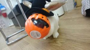 かぼちゃの顔したミッシュちゃん!2